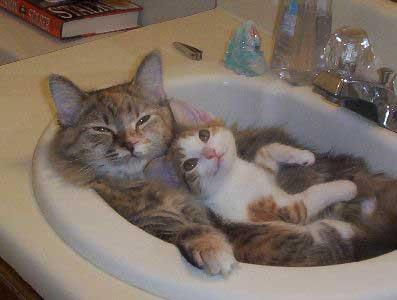 cats-kitten-sink-1